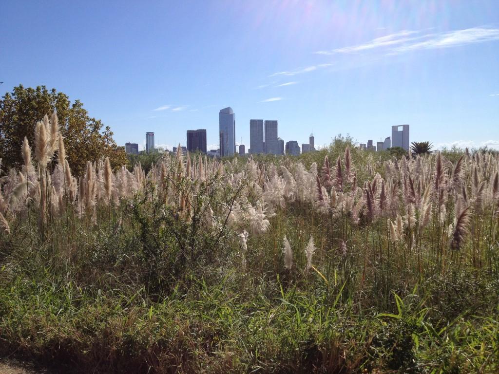 Une réserve écologique dans la ville