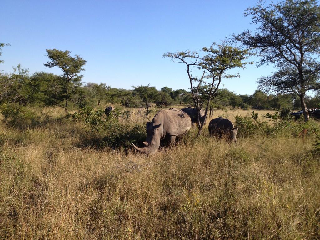 La famille Rhino